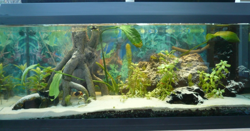Realisation De Decoration D Aquarium