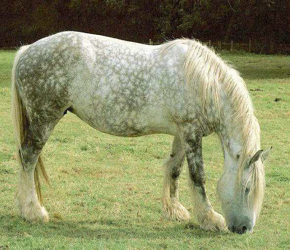 le-percheron